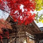 深大寺で水木先生を偲ぶ休日