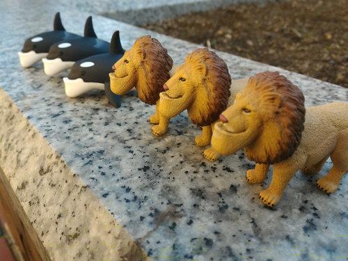 ライオンが3連続